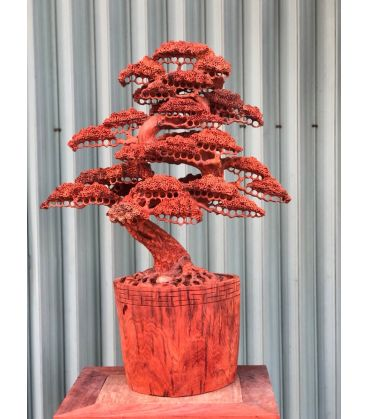 Chậu bonsai Đẹp Gỗ Hương