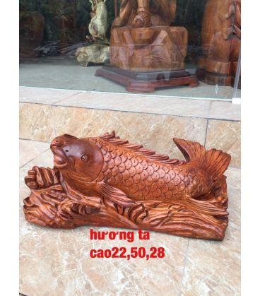 Cá Chép Gỗ Hương